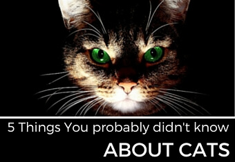 5 Things you probably didn't know about cats