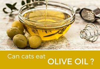 Can cats eat olive oil?