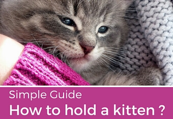 how to hold a kitten