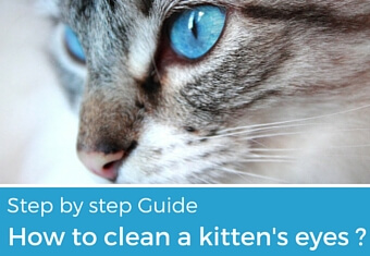 How to clean a kittens eyes