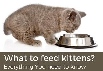 what to feed kittens