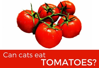Can cats eat tomatoes?
