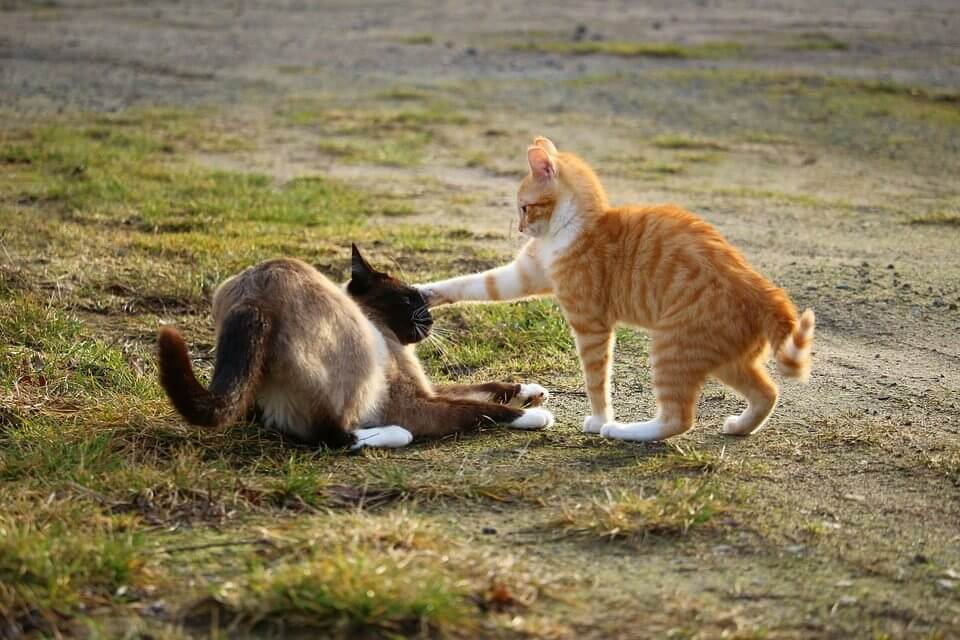 Kittens playing with each other