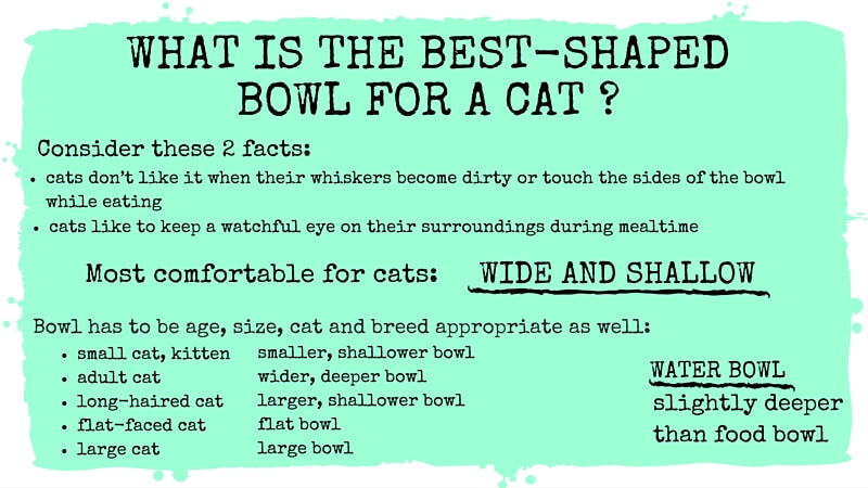 What is the best-shaped bowl for a cat?