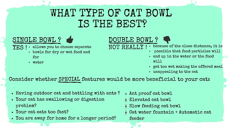 What type of cat bowl is the best?