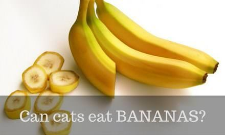 Can cats eat Bananas?