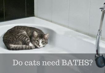 cats do need baths