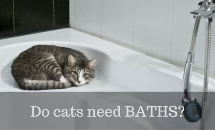 Do cats need Baths? – EVERYTHING you need to know