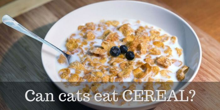 cats and cereal