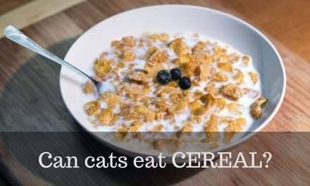 Can cats eat Cereal?