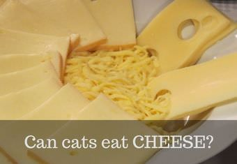 cats and cheese