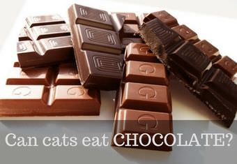 is chocolate safe for cats