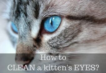 How to clean a kitten's eyes?