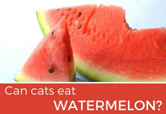 Can cats eat strawberries safe amount and risks for What parts of a watermelon can you eat