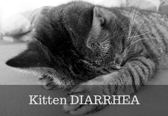 diarrhea in kittens
