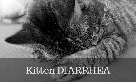 Kitten diarrhea