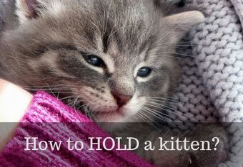 How to hold a cat?