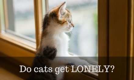 Do cats get Lonely? – Warnings signs and solutions