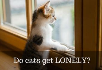 do cats get lonely
