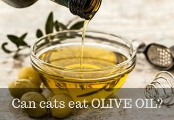 olive oil for cats