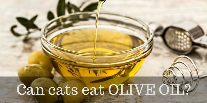 cats and olive oil