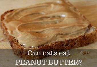 cats and peanut butter