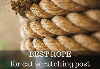 best sisal rope for scratching post