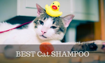 best cat shampoo