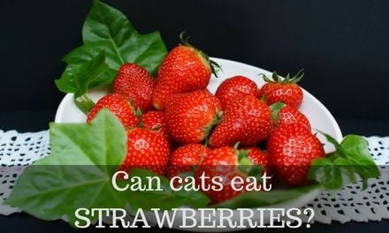Can cats eat Strawberries? (Safe AMOUNT and RISKS)