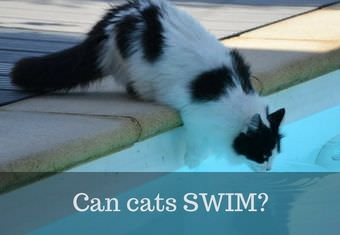 cat does not want to swim