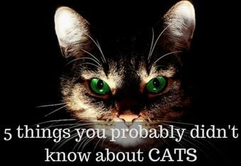 5 things you didn't know about cats