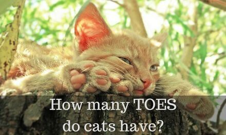 How many Toes do cats have?