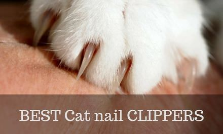 Best Cat nail Clippers 2017 – Types, Features, Reviews