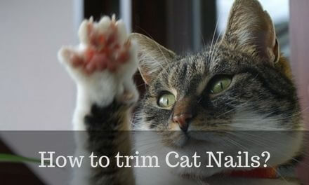 How to trim Cat Nails? – In 7 simple STEPS
