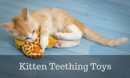 Kitten teething toys – Overview and 4 PERFECT Picks
