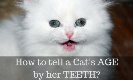 How to tell a cat's Age by her Teeth?