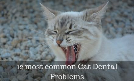 12 most common Cat Dental Problems