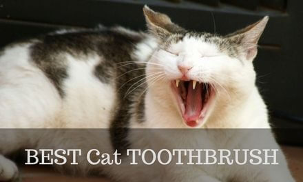 BEST Cat Toothbrush 2017 – Ultimate buyer's Guide