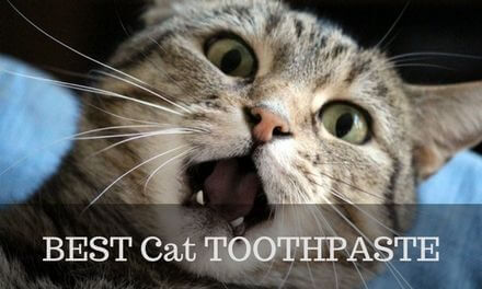 BEST Cat Toothpaste – 2017's top 3 picks