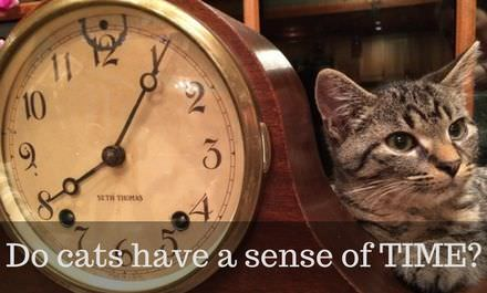 Do cats have a sense of TIME?