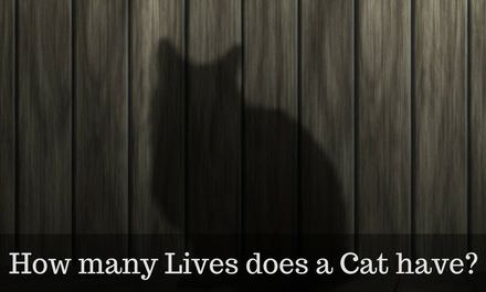 How many Lives does a cat have? – The actual Truth