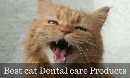 BEST cat Dental care Products for healthy Cat teeth
