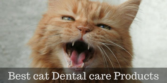Best Food For Cats Dental Problems